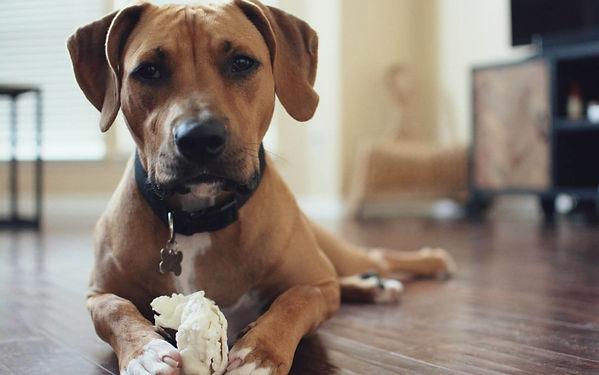dog-leadership-possessive-guarding.jpg