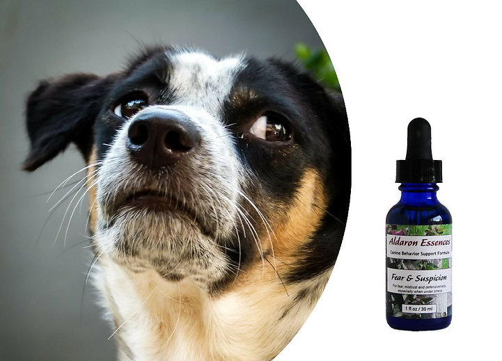 dog-fear-aggression-natural-remedy.jpg