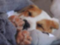New-Puppy-FAQ-3.jpg