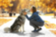 dog-training-simple-approach-to-increase