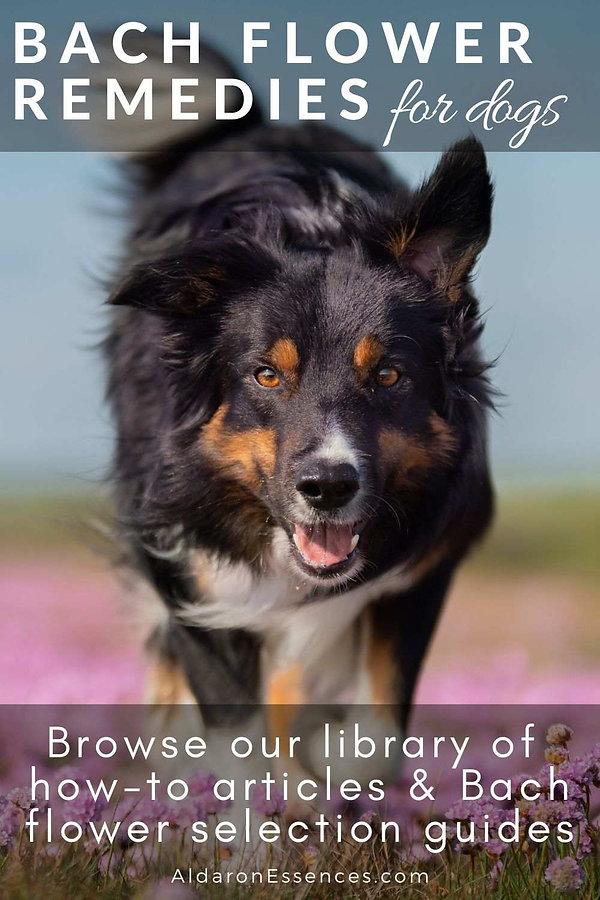 bach-flower-remedies-essences-dog-behavi