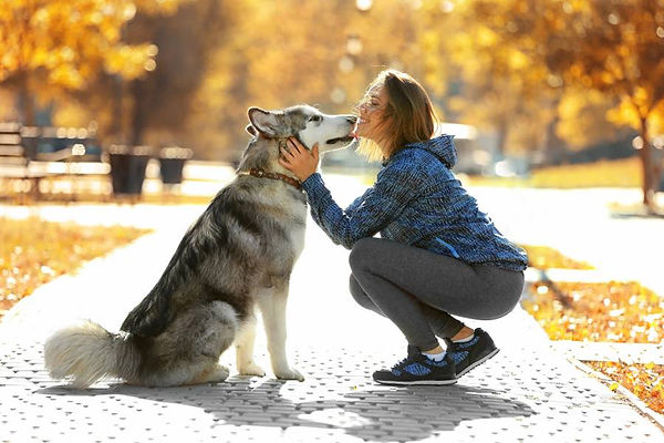 great-relationship-dog-training.jpg