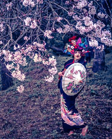 Japanese dance Geisha show
