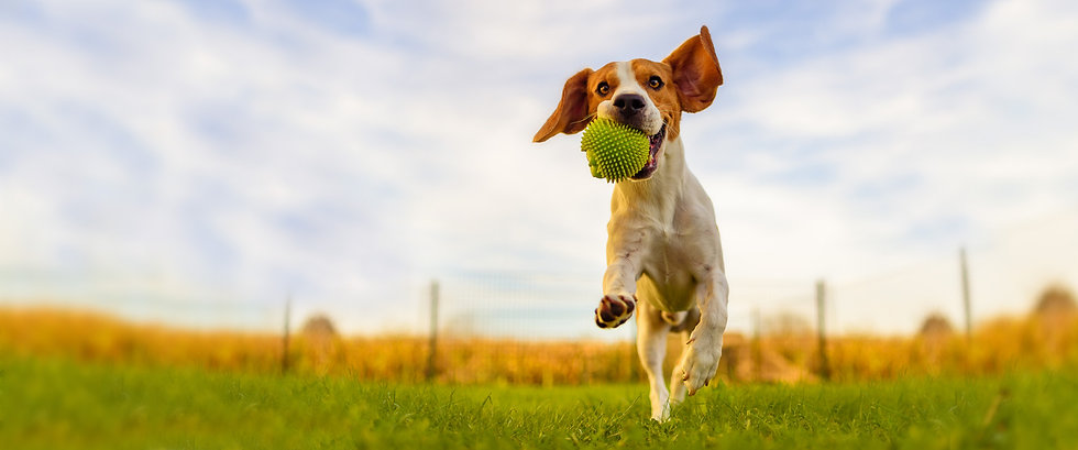 dog_home2.jpg