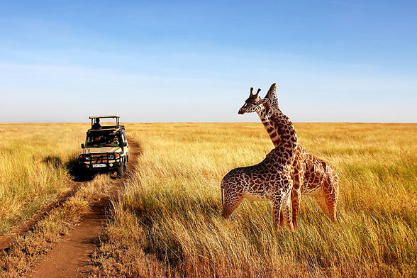 About-Going-Places-Exotic-travel-giraffe