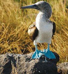 Lindblad-bird.jpg