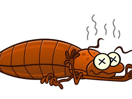 CNY Bed Bug Extermination - 1 year warranty