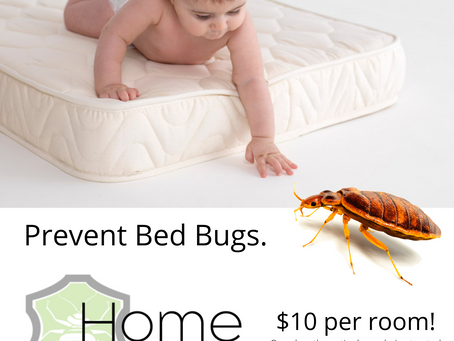 Affordable Bed Bug Prevention
