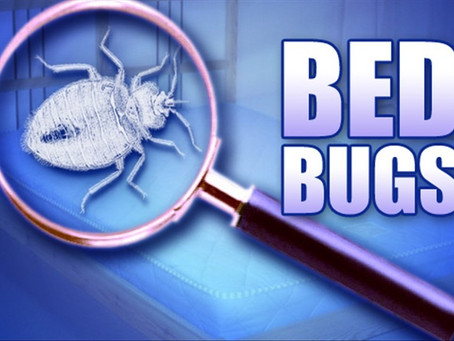 Bed Bugs are still on the rise!