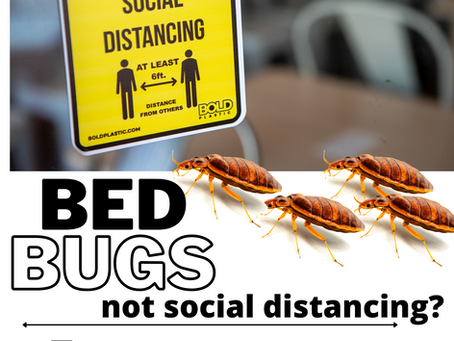Bed Bugs not social distancing?