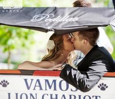 Vamos! Lion Chariot - Wedding Transportation State College
