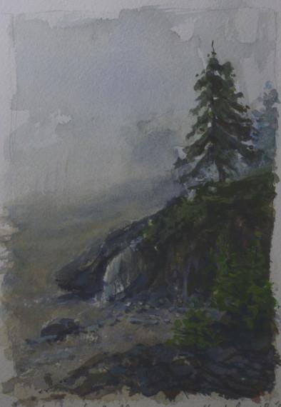Beach Pine Study in Fog