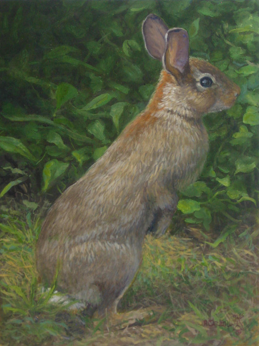 Bay Head Rabbit