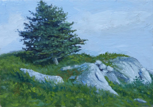 Rock Pine