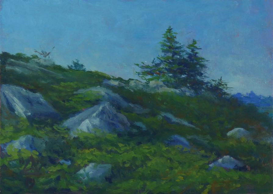 Nova Scotia Pines