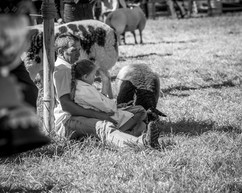fishguard agricultural show