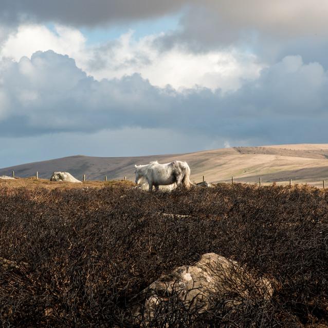 Wild skies and wild horses