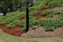 EnviroColor-pine straw-paint