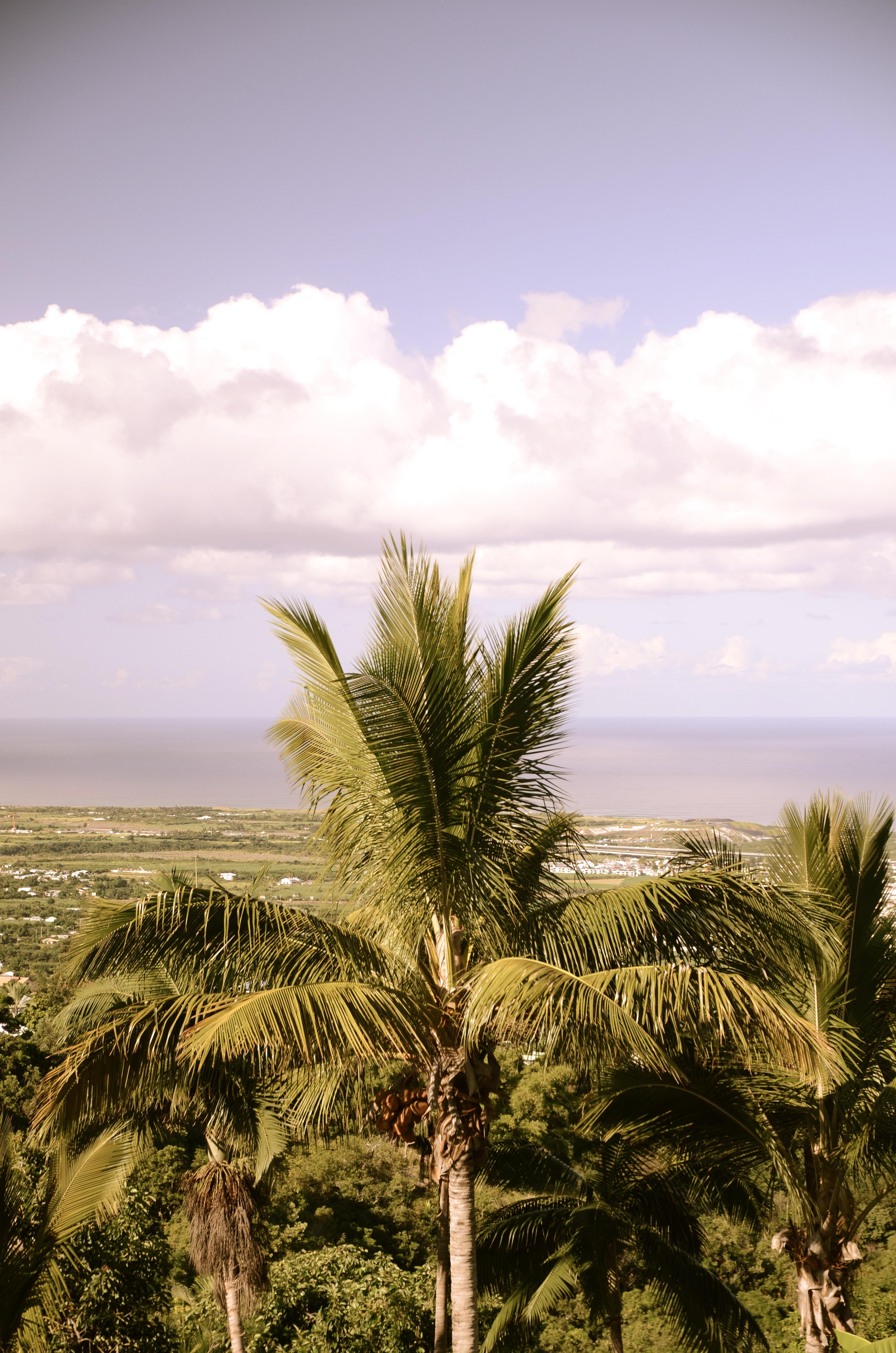 Un palmier sur une île