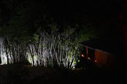 bambouseraie illuminée