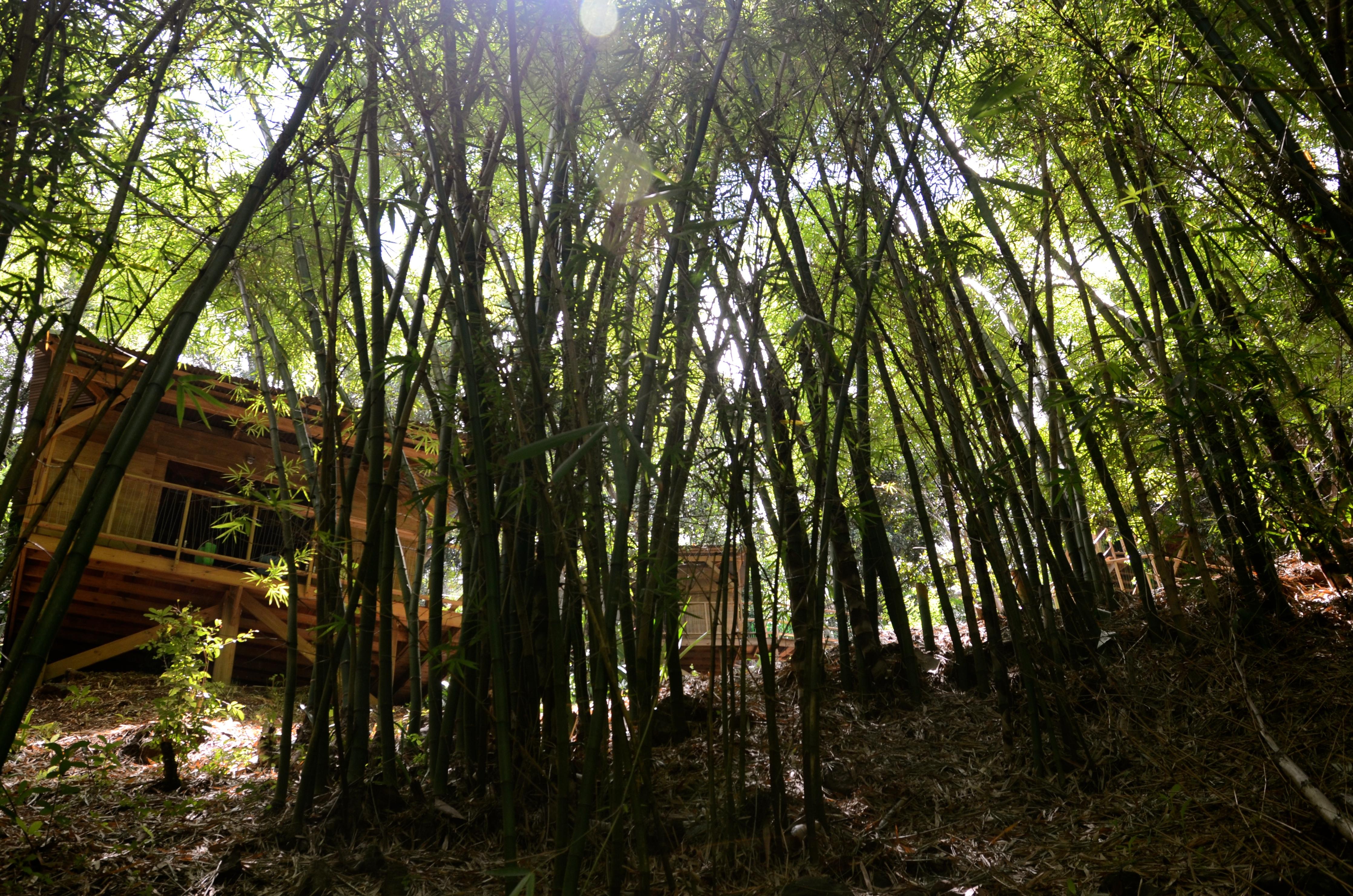 L'autre coté de la bambouseraie