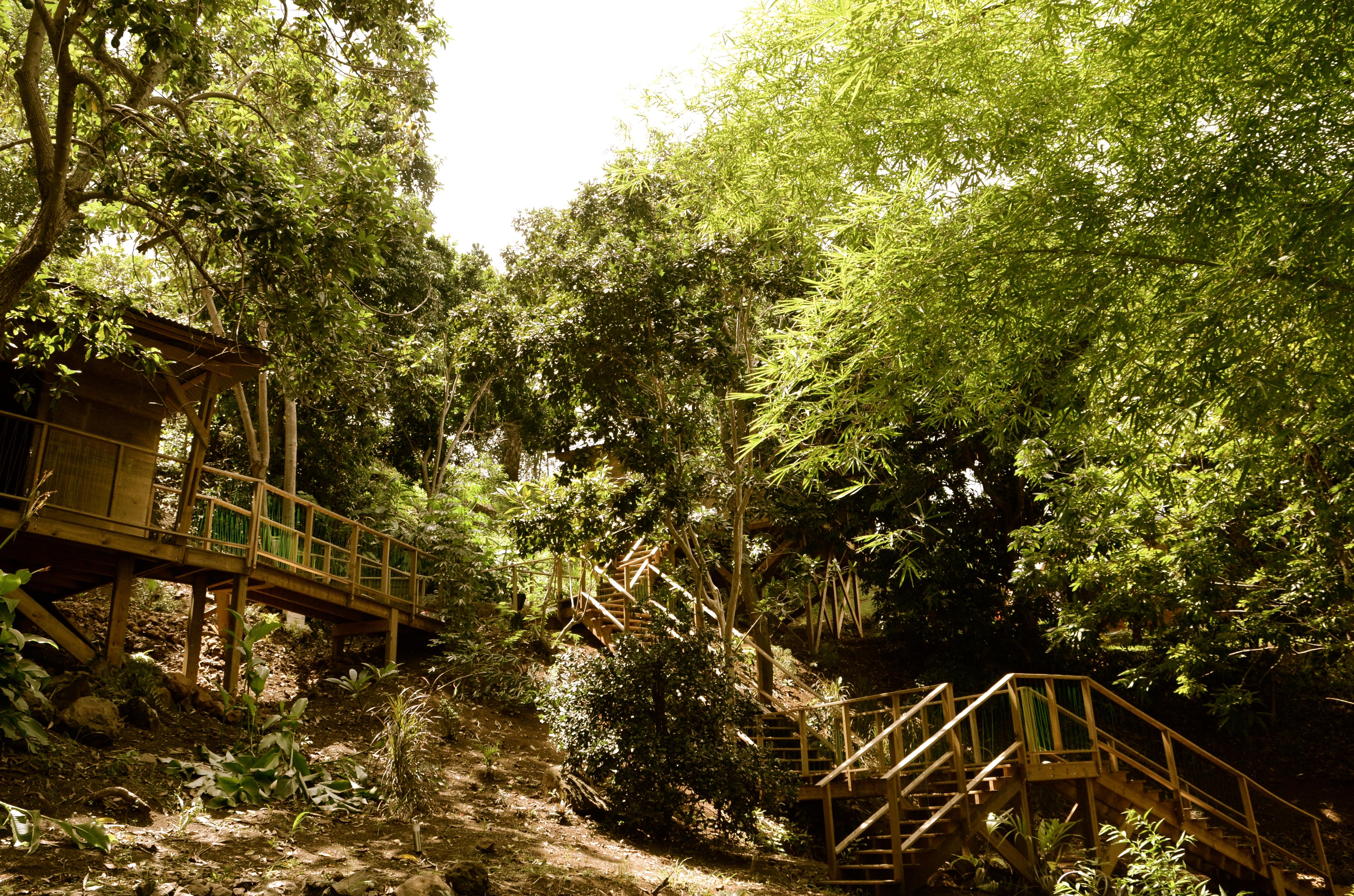 Grand pont de bois