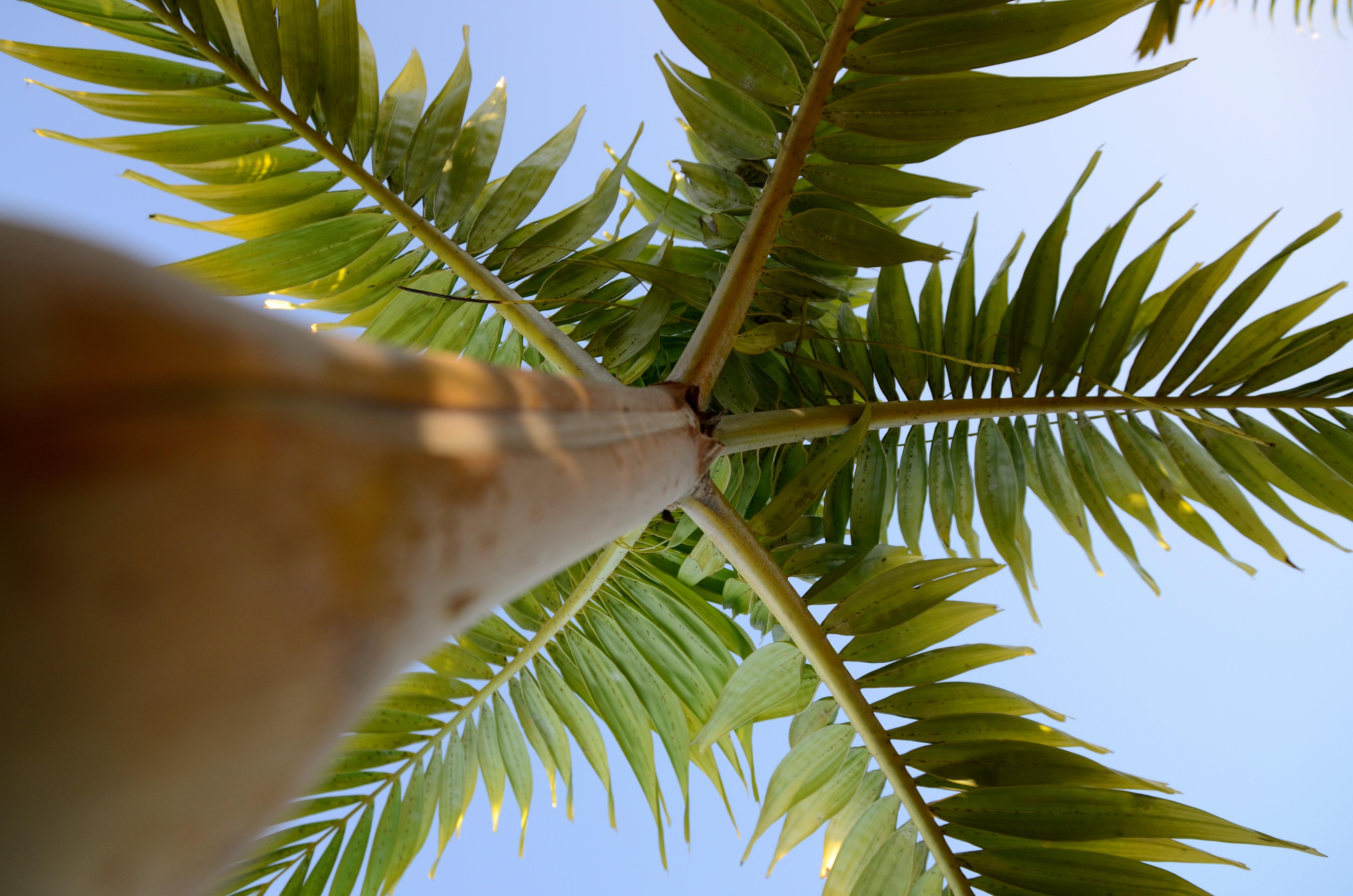 Sur le palmier, le ciel....