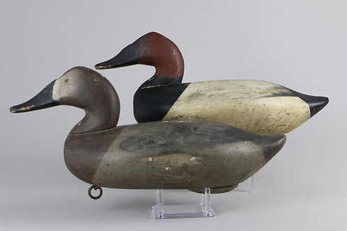 James Currier, Canvasback Pair