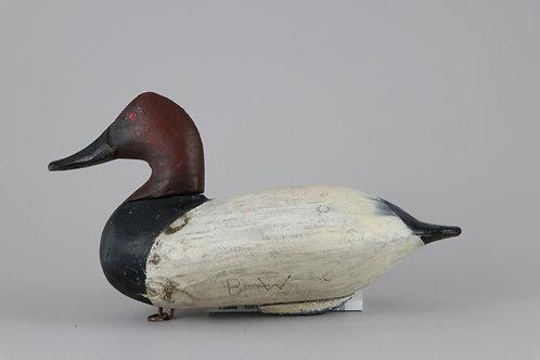 Canvasback Drake  William Heverin  Charlestown, Md