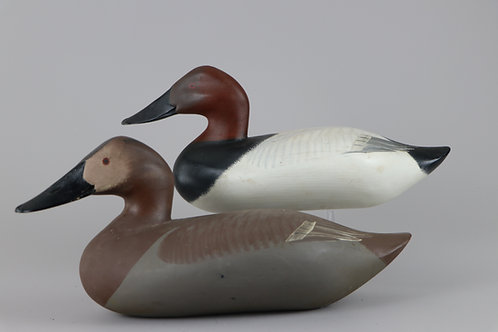 Canvasback Pair  R Madison Mitchell  Havre de Grace Md