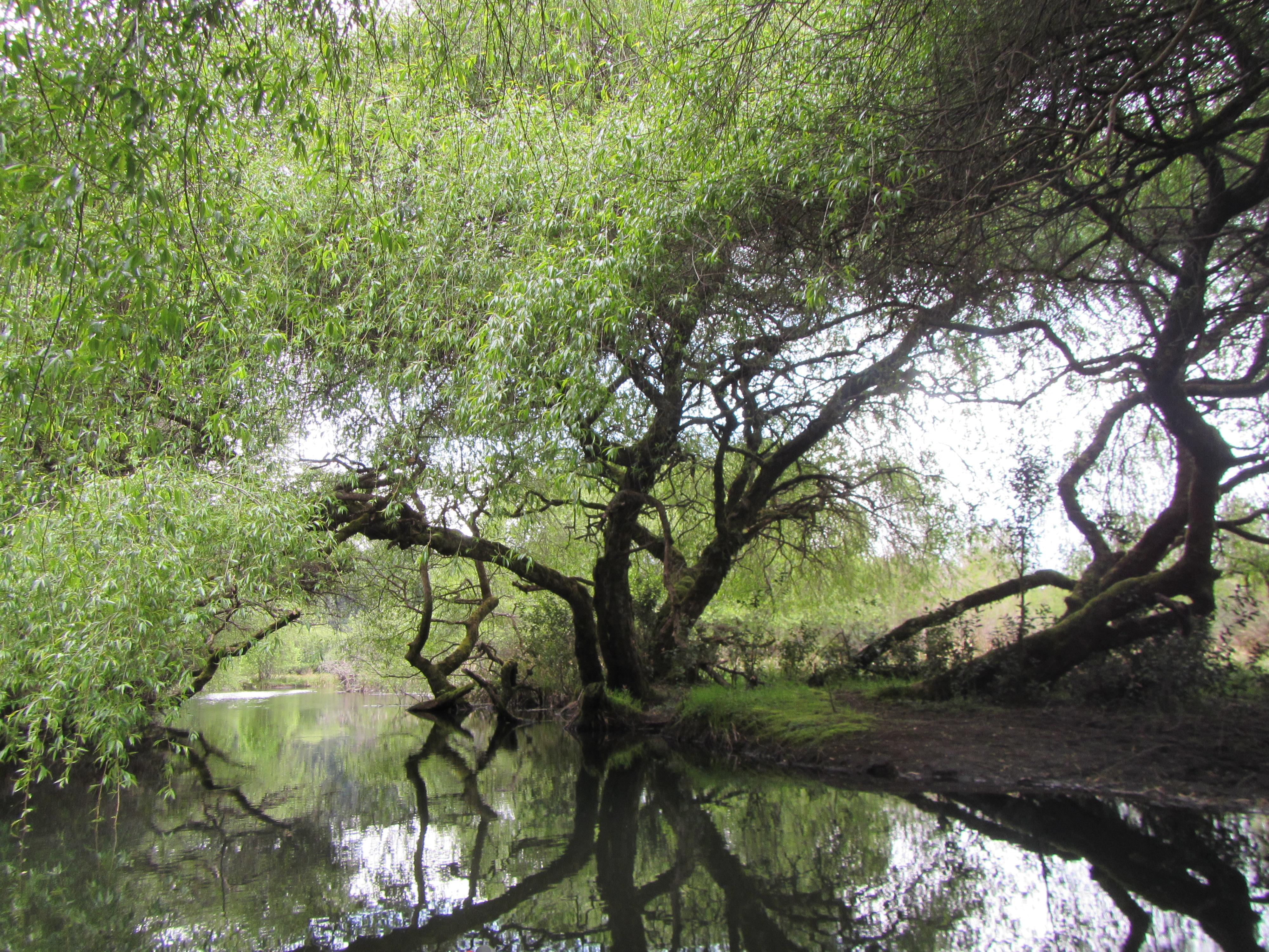 Kayak laguna la poza Patagonia