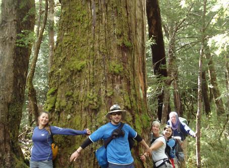 8 essences d'arbres de la Patagonie chilienne