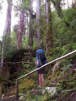 Alerce Andino National Park Chile