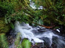Parque Nacional Alerce Andino Sector Chaica