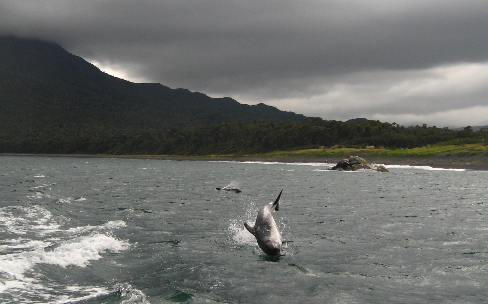 Toninas Dolfin Turismo aventura Patagonia Chile