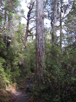 Reserva Llanquihue Alerce Chile