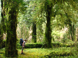 Trek Parque Tagua Tagua Park Patagonia Chile