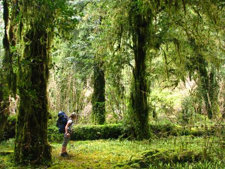 Mejores opciones de caminatas: el Parque Tagua Tagua