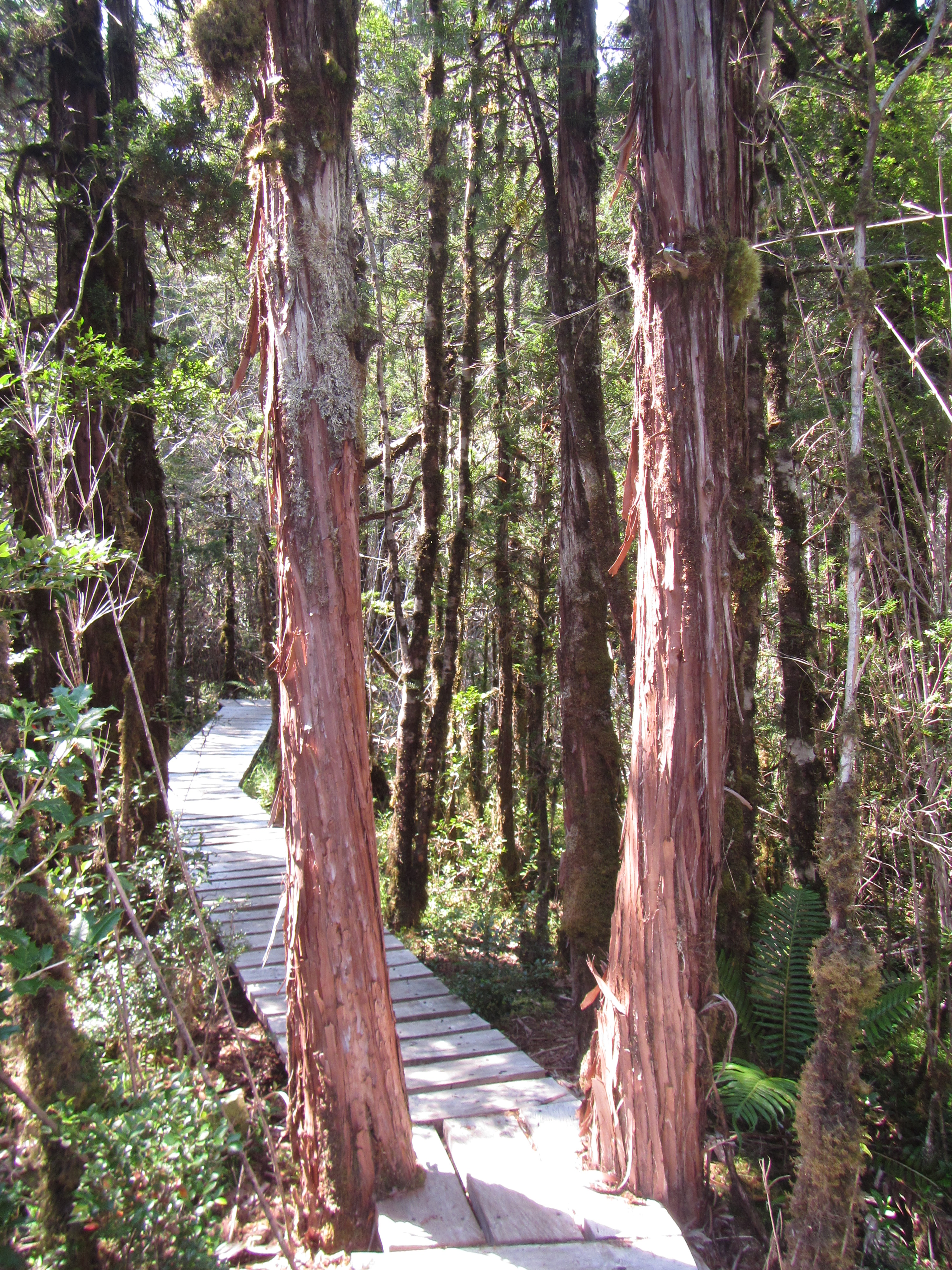 Parque Tagua Tagua Valle Puelo Chile