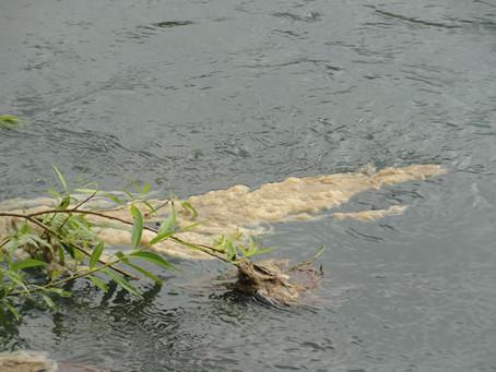 ¿Cómo prevenimos que el Didymo se apodere de nuestros lagos y ríos?