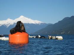 Kayak fjord Reloncavi Adventure Tourism Patagonia Chile