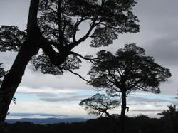 Reserva Llanquihue Chile