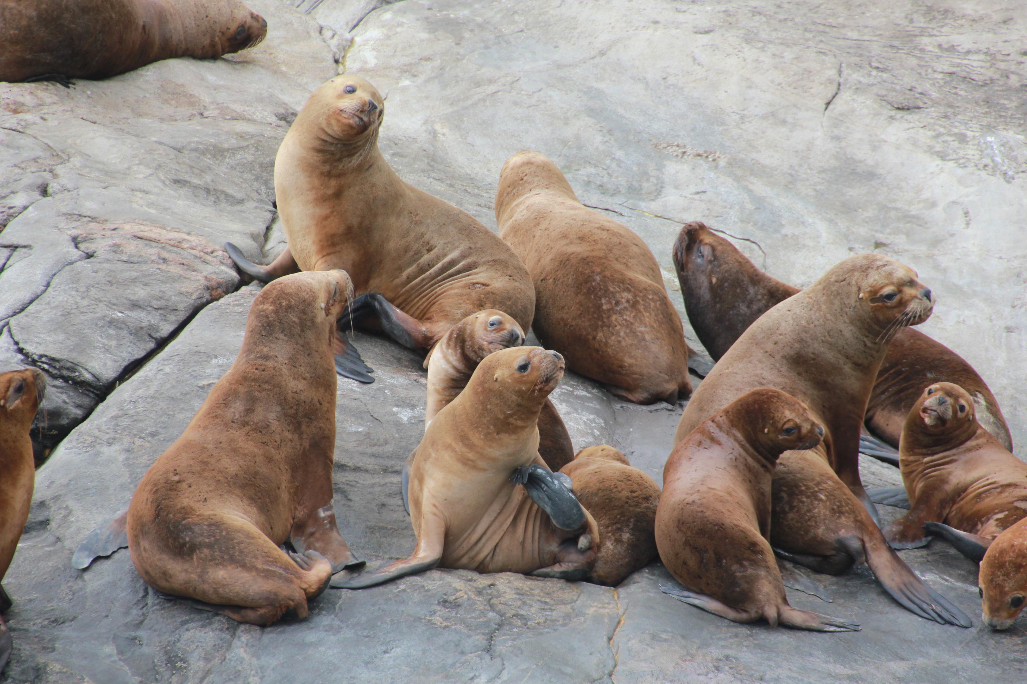 Kayak sea lions Tourism Patagonia Chile