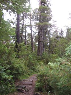 Trek Reserva Llanquihue Chile