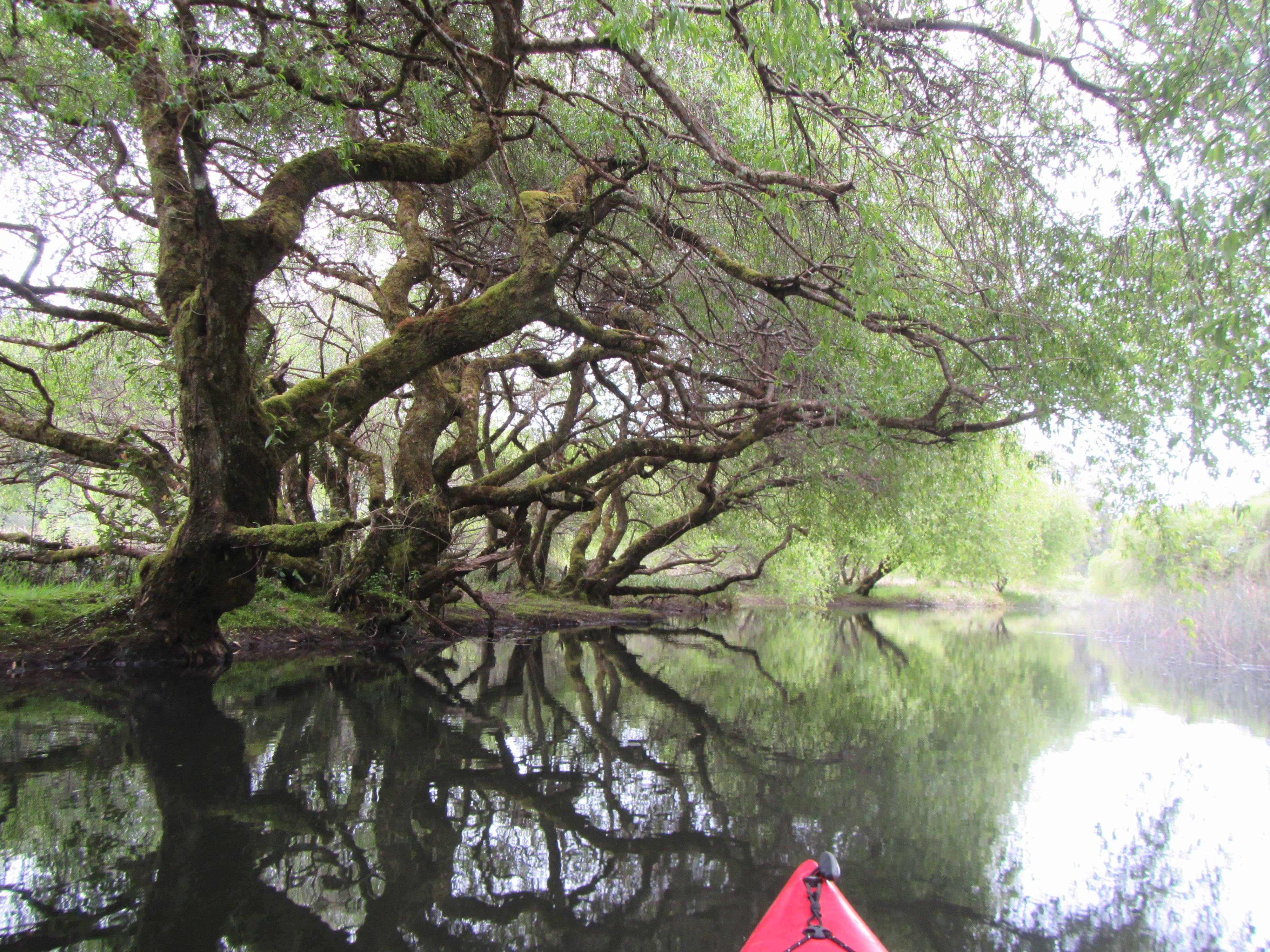 Kayak laguna la poza (15)