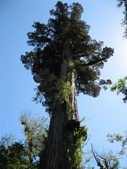 Trek Parque Alerce Andino Patagonia