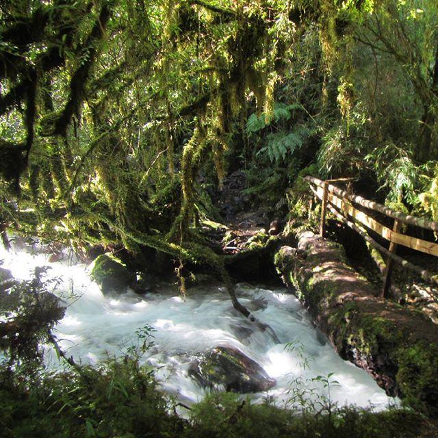 Sendero Parque nacional Alerce Andino