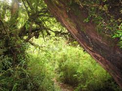 Reserva Llanquihue Bosque chileno