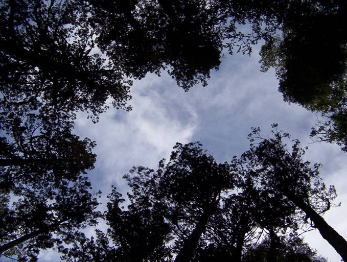 Parque alerce andino Chile