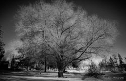 Tracy Lynn Photography-abandoned tree